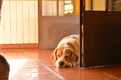 dog in door