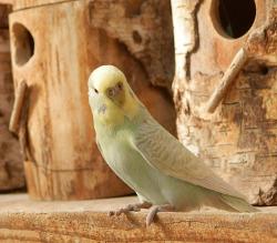 bird hideaway