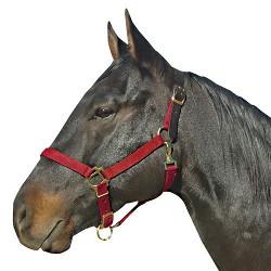 Intrepid International Leather Horse Halter