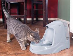 PetSafe Cat Dog Water Fountain