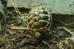 turtle in terrarium