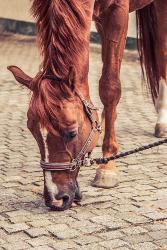 horse needs salt