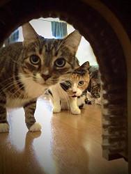 Cathole Interior Cat Door