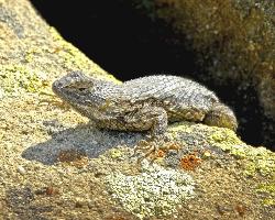 reptile basking