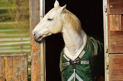 blanketing a horse