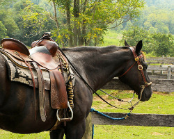 care of horse saddle