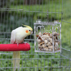Parrot Creative Foraging Feeder