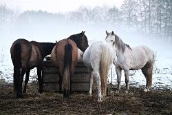 Feeding horses on pasture