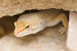reptile hiding in cave