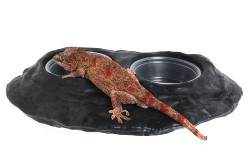 Ultimate Gecko Ledge Magnetic Gecko Diet Feeder