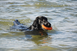 how to keep dog cool in summer