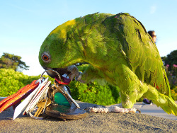 Parrot playing