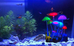 Govine Aquarium Glowing Decorations for Fish Tank