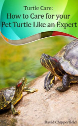 How to Care for Pet Turtles