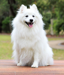 How to keep white dog fur white