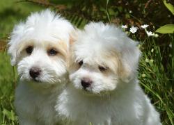 How to keep white dog fur white