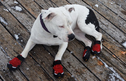 dog shoes dog boots