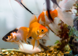 How to treat most common Fish Diseases