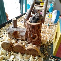 B&P Natural Wood Hamster Toys
