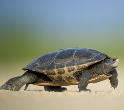 Wardley Turtle Treat