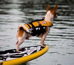 EzyDog Dog Life Vest