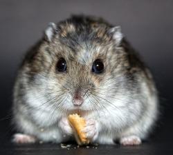 Vitakraft Dwarf Hamster Formula